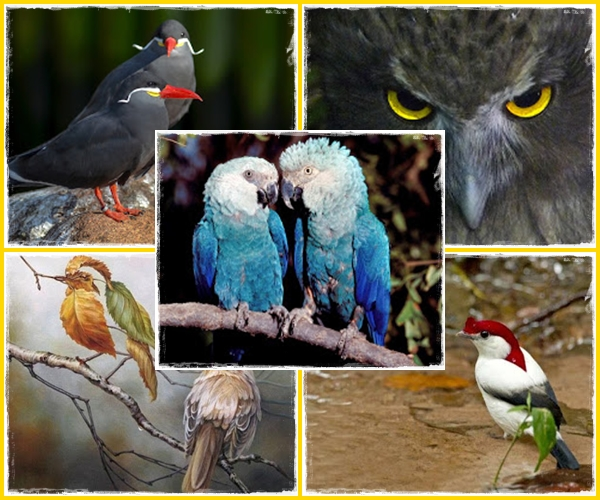 https://bio-orbis.blogspot.com/2017/12/retrospectiva-2017-top-10-aves.html