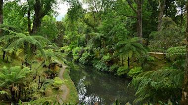 Terra Nostra Garden: un jardín botánico en las Azores