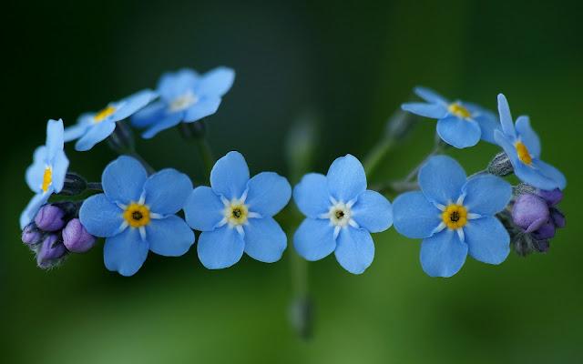 Foto met blauwe bloemen in een krans