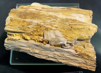 Carnotite in fossilized wood from St. George, Utah