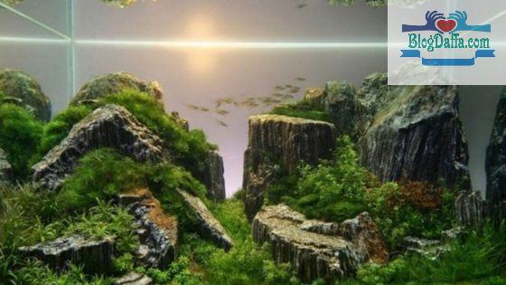 Aquascape Tema Tebing