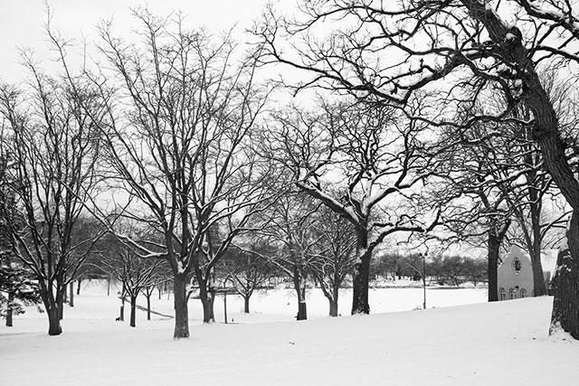 Snowfall in Loring Park, MN