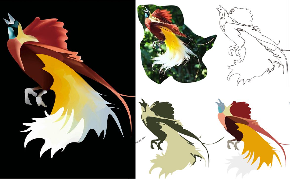 13+ Terpopuler Gambar Burung Cendrawasih Dan Penjelasannya