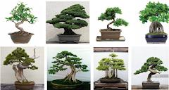 Proses dan Cara Mudah Membuat Pohon/Bunga Bonsai Berbahan Plastik
