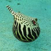 أسماك مذهلة وغربية amazing and strange fishes