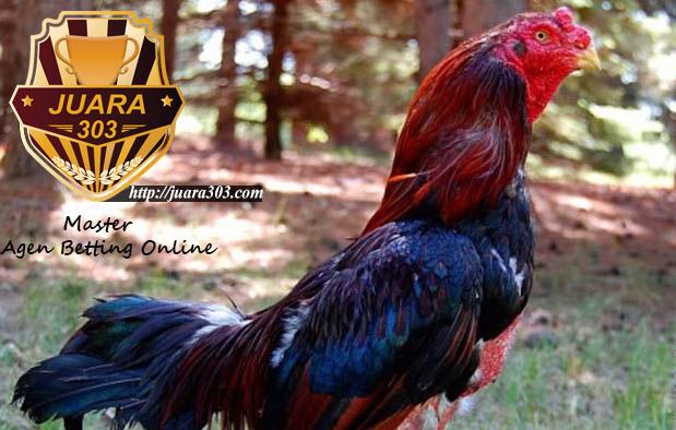 Ramuan Jamu Ayam