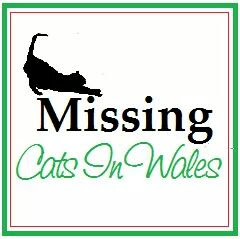 Missing Cats in Wales