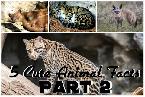 5 Cute Animal Facts PART 2