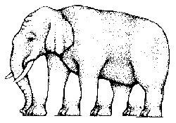 Nueva Consciencia Dibujos Para Desarrollar La Percepcion Visual Y