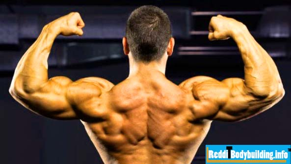 How to Improve Muscle Fitness Bodybuilding diet