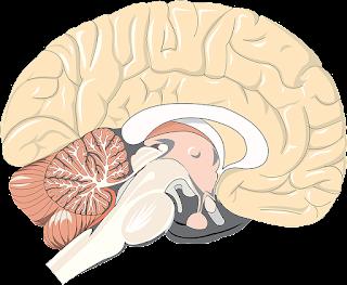 Mengenal Kanker Otak