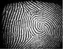 biométricos de huella dactilar