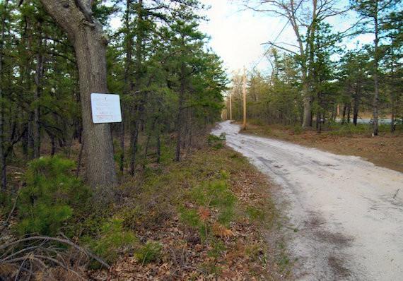 Sebuah jalan di New Jersey Pine Barrens dekat Ong's Hat