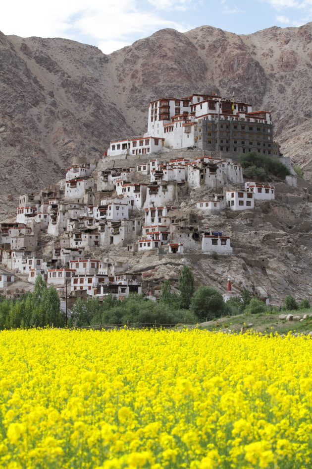 Ladakh's Chemrey Monastery as seen from the mustard fields below