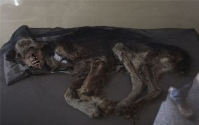 Pre-Hispanic dog fossils displayed at Pachacamac site museum