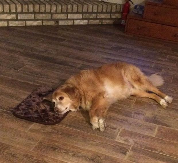 Nhận được thảm họa mua hàng online, chú chó vẫn cố tỏ ra OK fine