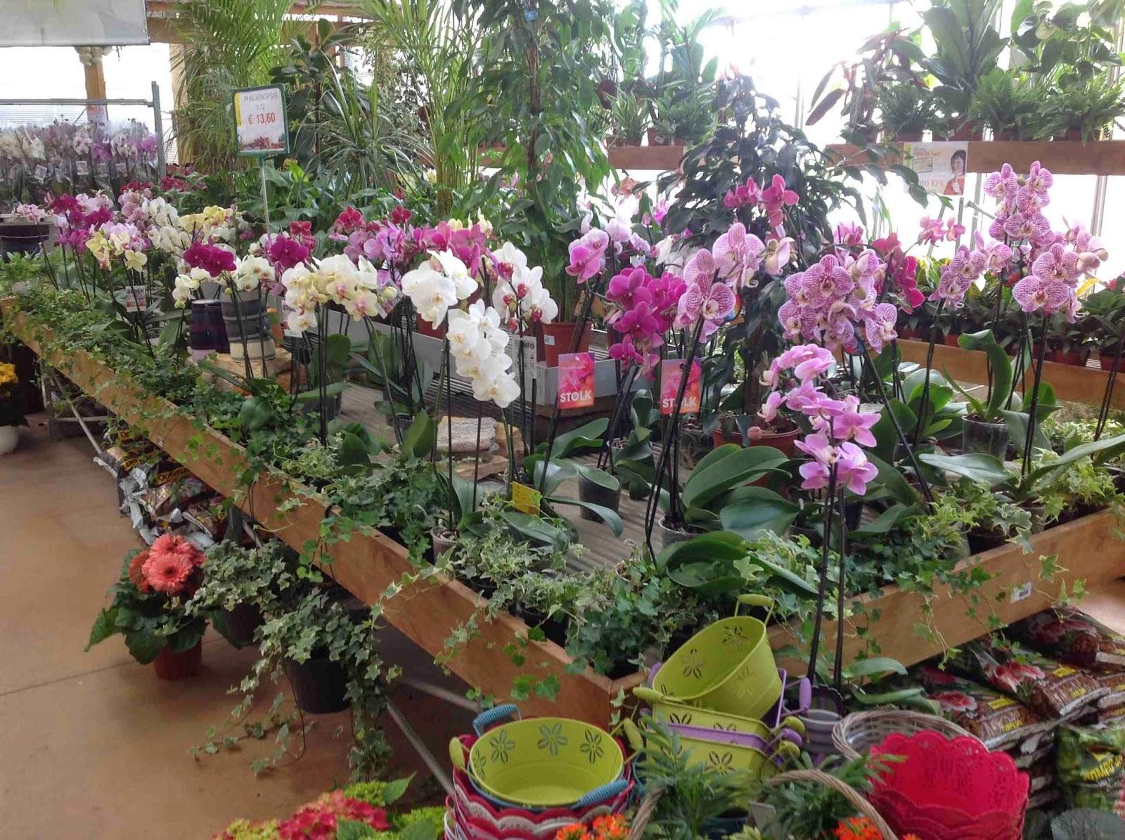 Orchidee Meravigliose Trucchi E Segreti orchidee e bonsai al gardenville