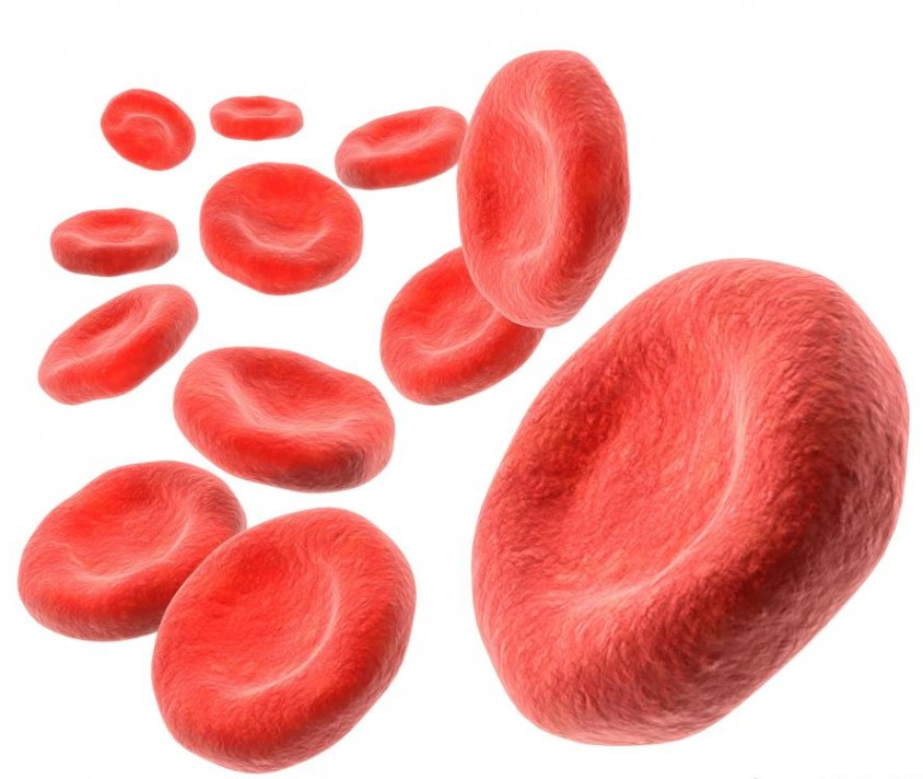 como dominar solfa syllable hemoglobina alta