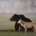 El Oso y el Lobo Fabula Concepcion Arenal
