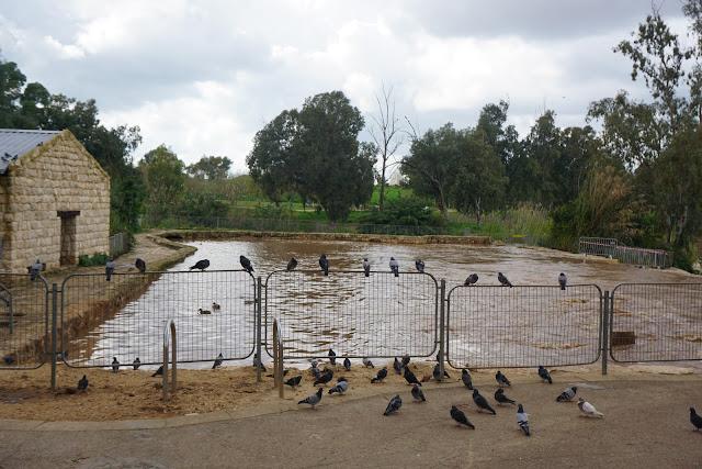 ציפורים רבות בשבע טחנות