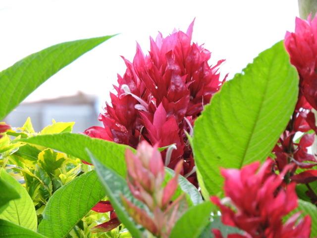 naturaleza color flor belleza