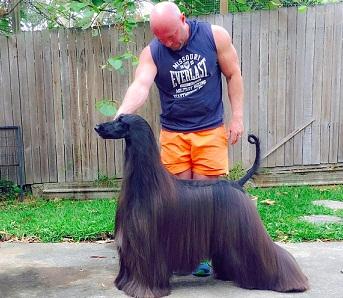 Image result for इस कुत्ते की हेयर स्टाइल नही ही किसी मॉडल से कम