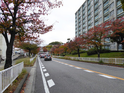 枚方新香里線 ソメイヨシノの紅葉