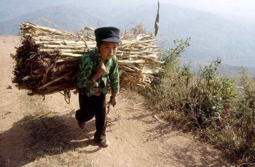 FAO: 108 millones de niños en el mundo trabajan en agricultura