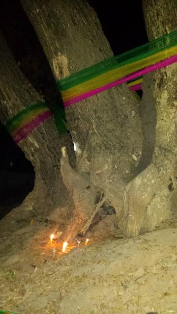 Heilige Bäume in Thailand