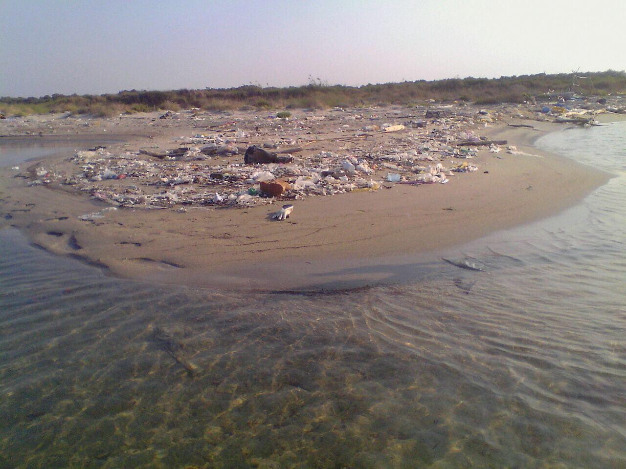 """39ff3091e2ec2 di Redazione - L agronomo Casili vice presidente della Commissione Ambiente  racconta la sua scoperta  """"sui litorali delle Cesine quantità industriali  di ..."""