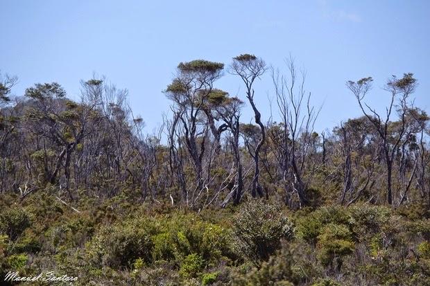 Parque Nacional Chiloè, sendero El Tepual