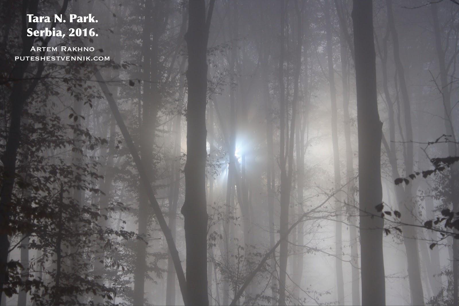 Лучи солнца пробиваются сквозь туман