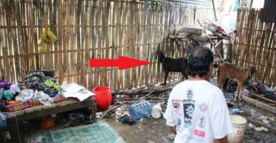 Memilukan! Ayah Dan Anak Ini Harus Hidup Bersama Kambing Dalam Satu Gubuk
