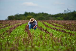Analizan recursos para productores de maíz y frijol