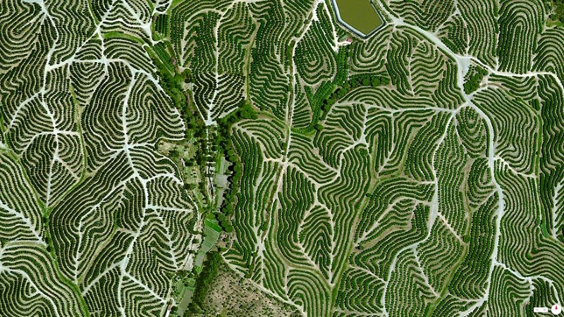 7. Vineyards, Huelva, Spain - 17 Breathtaking Satellite Photos That Will Change How You See Our World