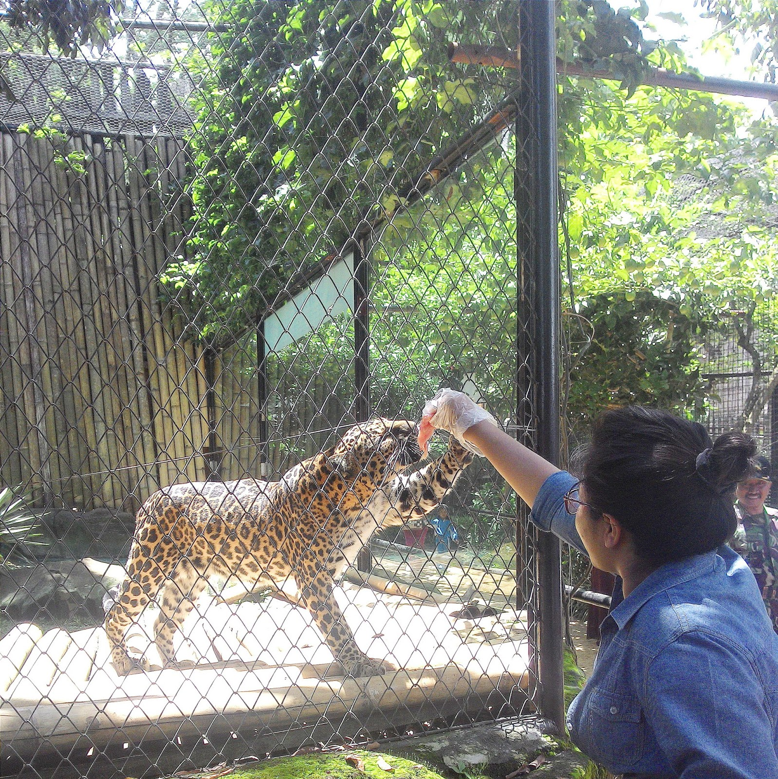 Tandins Malang Batu Secret Zoo