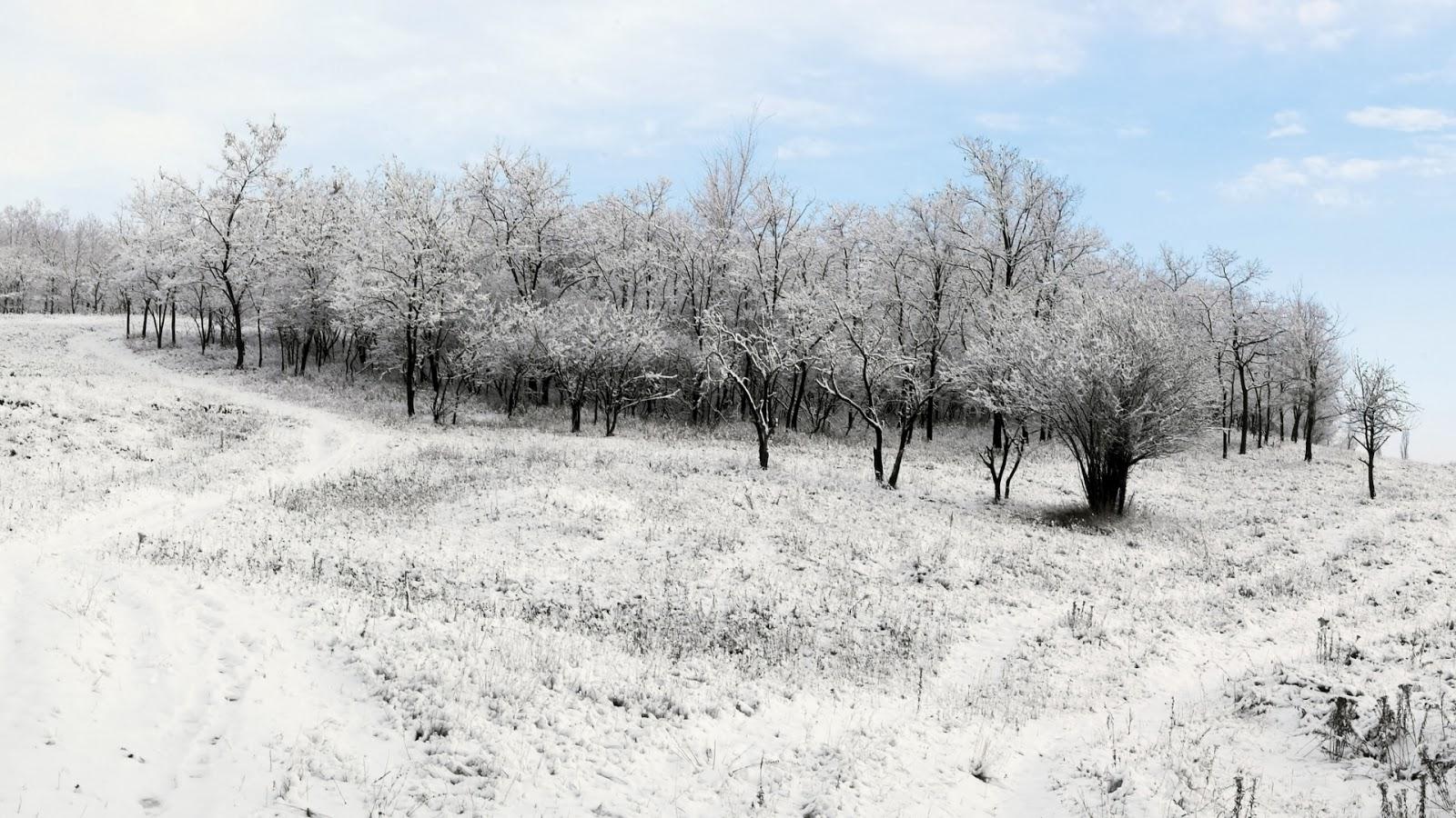 Kale bomen met sneeuw in de winter