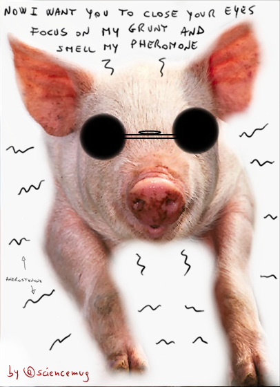 cool pig (by sciencemug)