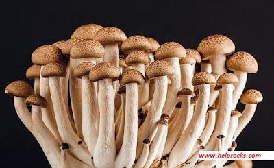 Mushroom- मशरुम मशरूम