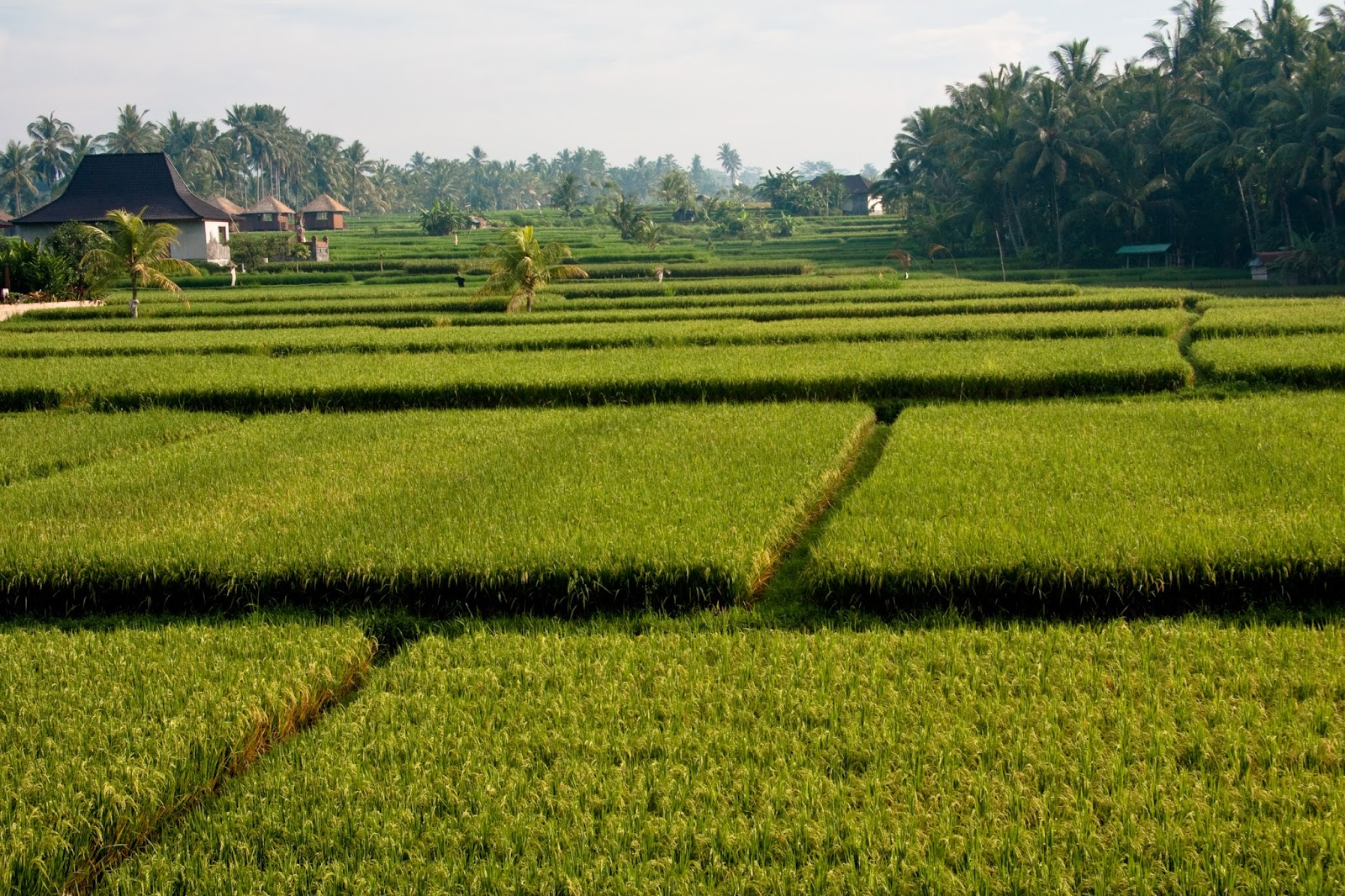 Marcoemimma Consulentiviaggio Bali La Via Del Riso