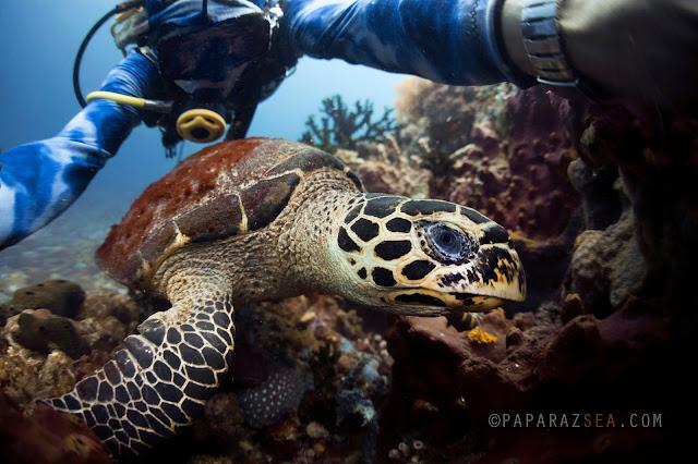 Learn Scuba, Underwater Photography, Jun V Lao