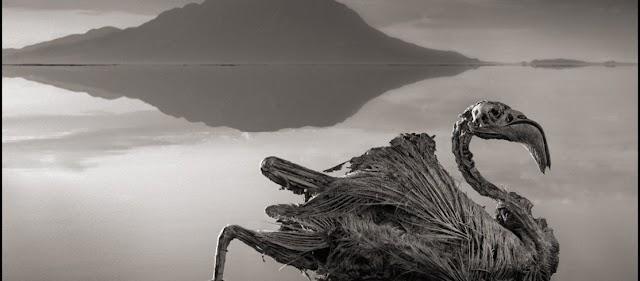 Η λίμνη του «θανάτου» - Ρουφάει τη ζωή σε όποιον την πλησιάζει (φωτό)