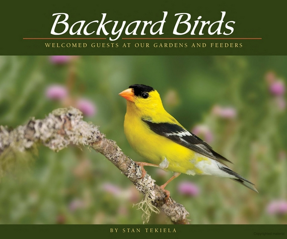 Wild Birds Unlimited: Backyard Birds: Welcomed Guests At