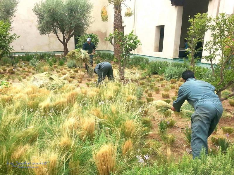 Le jardin secret en marrakech for Le jardin secret des hansen