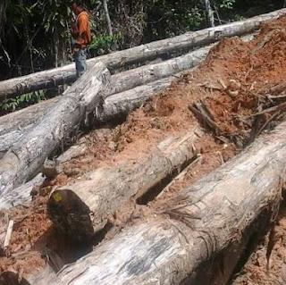 Dugaan Illegal Logging Memprihatinkan, Pemkab Bima Diminta Turun Tangan