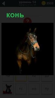 В темноте стоит конь, готовый бежать галопом в полной амуниции с уздечкой и поводьями