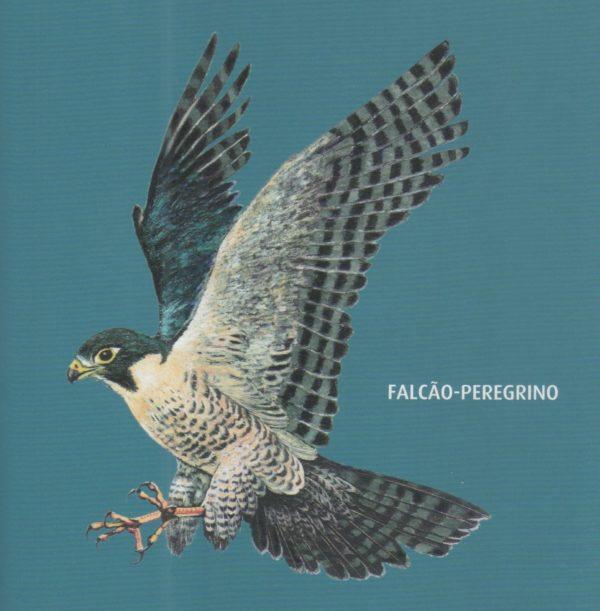 falcÃo peregrino a ave mais veloz do mundo peixes e aves