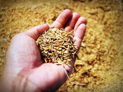 Moral stories in hindi - किसान के खेत में फसल क्यूँ नहीं हुई।