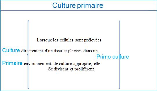 culture primaire