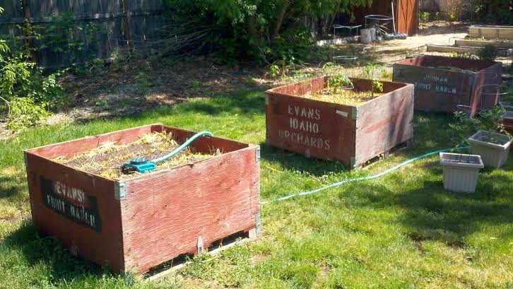 Fruit box gardens